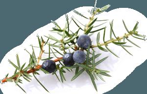 Frisches Gemüse – Gasthaus zur Linde